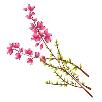 Ilustración de calluna vulgaris o heather ilustración
