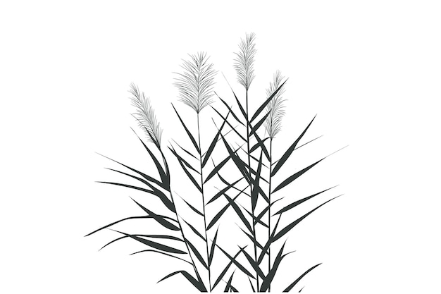 Ilustración de cañas blancas y negras. silueta de caña sobre fondo blanco.