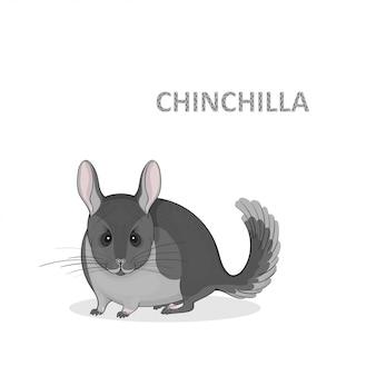 Ilustración, una caricatura linda chinchilla gris