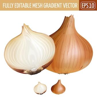 Ilustración de cebolla en blanco
