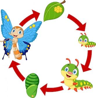Ilustración del ciclo de vida de la mariposa.