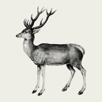 Ilustración de ciervos vintage en vector