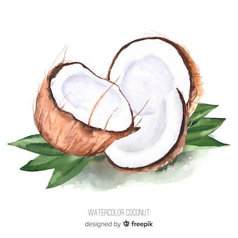 Ilustración de coco de acuarela