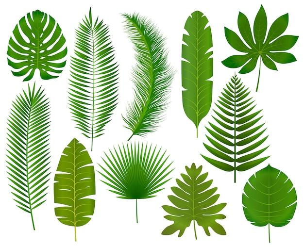 Ilustración de colección de hojas tropicales