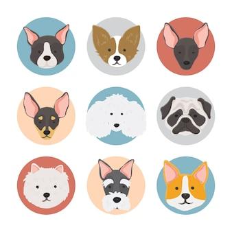 Ilustración de la colección de perros