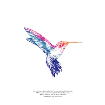Ilustración de colibrí colorido handrawn