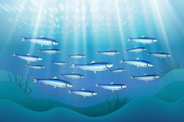 Ilustración de colonia de peces
