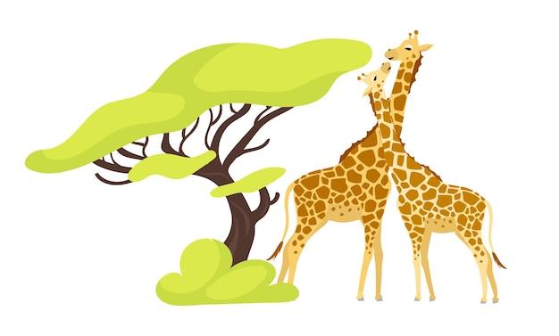 Ilustración de color plano de par de jirafas. par de animales africanos cerca de árboles exóticos. flora y fauna. follaje verde. personaje de dibujos animados aislado criatura del sur sobre fondo blanco