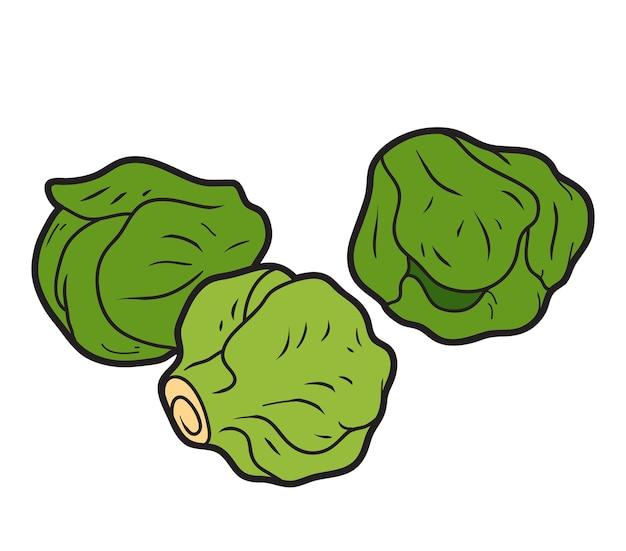 Ilustración de color vectorial, verduras de colores, coles de bruselas