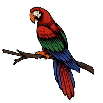 Ilustración colorida de un loro ara aislado en blanco