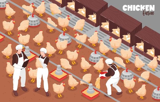 Ilustración de composición isométrica de producción de granja de pollos de corral libre de aves de corral