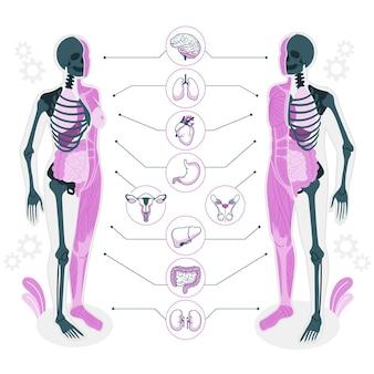 Ilustración del concepto de anatomía del cuerpo