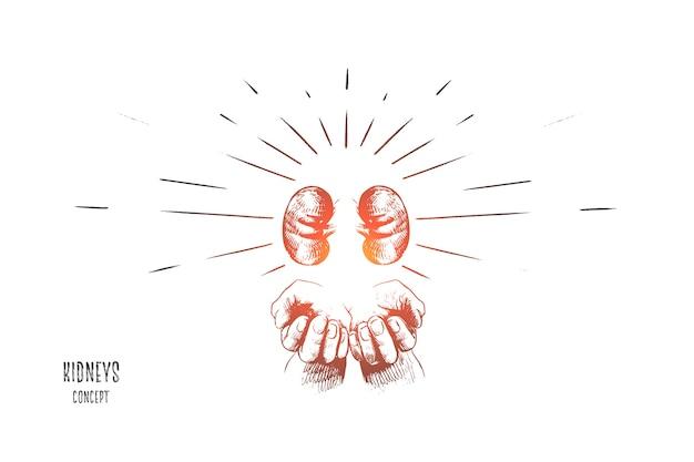 Ilustración del concepto de riñones
