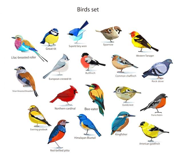 Ilustración de conjunto de aves