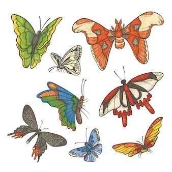 Ilustración de conjunto de colores con textura. diferentes mariposas tropicales volando y sentadas. esquema de dibujo boceto kit de color dibujado en tinta