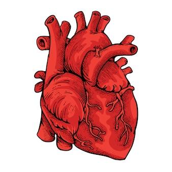 Ilustración del corazón con estilo de grabado
