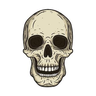 Ilustración de cráneo humano en estilo dibujado a mano.