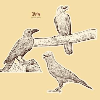 Ilustración de un cuervo