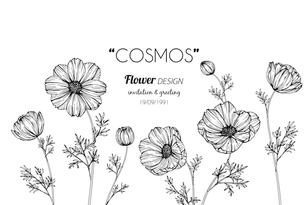 Ilustración de dibujo de la flor del cosmos