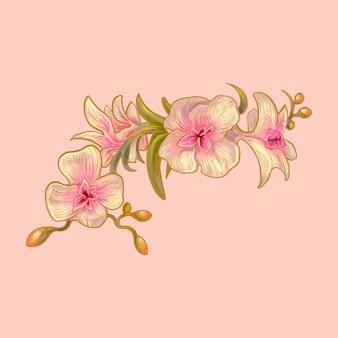 Ilustración de flores de orquídeas
