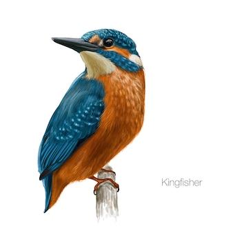 Ilustración de pájaro martín pescador
