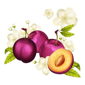 Ilustración detallada de frutas y flores de ciruela