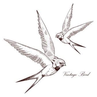 Ilustración de detalle de pájaro de dibujo