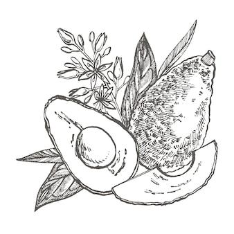 Ilustración dibujada a mano de aguacate