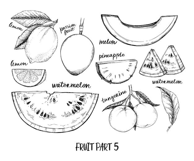 Ilustración dibujada a mano. frutas tópicas y exóticas. comida sana. sandía, piña, limón