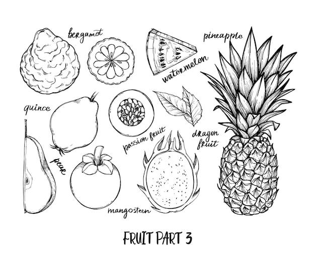Ilustración dibujada a mano - frutas tropicales y exóticas. piña, sandía, pera, mangostán