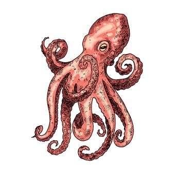 Ilustración dibujada a mano pulpo