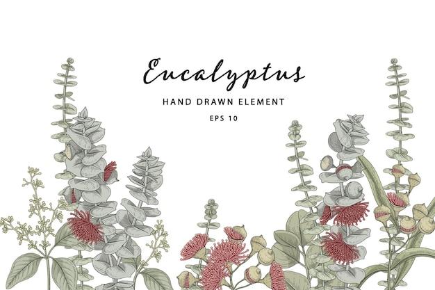 Ilustración de dibujado a mano botánico de planta de eucalipto