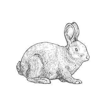 Ilustración de dibujado a mano de conejo.