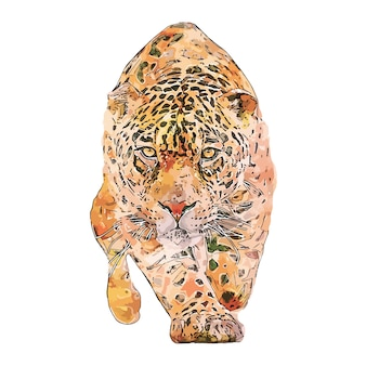 Ilustración de dibujado a mano dibujo acuarela animal jaguar fondo blanco aislado