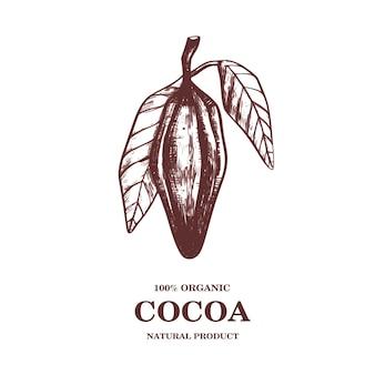 Ilustración de dibujado a mano de granos de cacao.