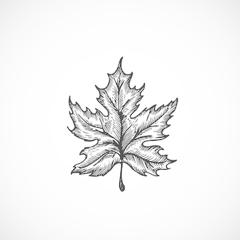 Ilustración de dibujado a mano de hoja de arce otoñal. boceto botánico abstracto.