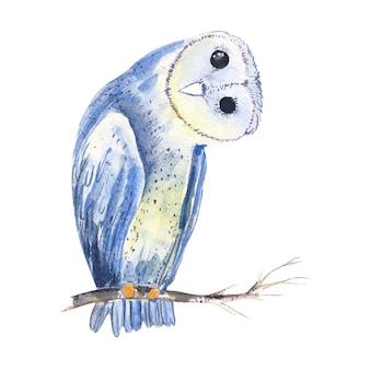 Ilustración de dibujado a mano lindo búho acuarela con aislado en el fondo blanco