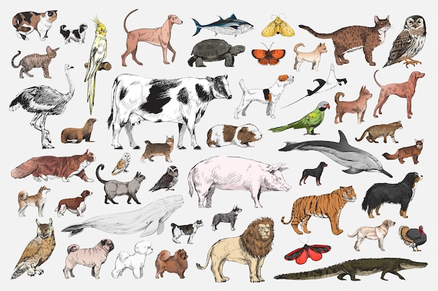Ilustración de dibujo estilo de colección animal.