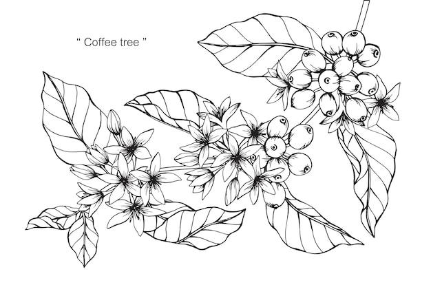 Ilustración de dibujo de flor de café
