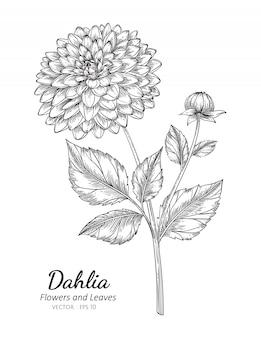 Ilustración de dibujo de flor de dalia con arte lineal sobre fondo blanco