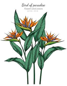 Ilustración de dibujo de flor y hoja de ave del paraíso con arte lineal sobre fondos blancos.