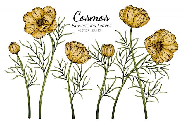 Ilustración de dibujo de flor y hoja de cosmos amarillo