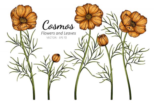 Ilustración de dibujo de flor y hoja de cosmos naranja