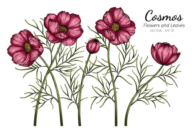 Ilustración de dibujo de flor y hoja de cosmos rojo