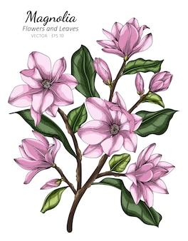 Ilustración de dibujo de flor y hoja de magnolia rosa con arte lineal en blanco