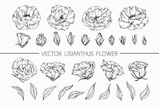 Ilustración de dibujo de flor de lisianthus