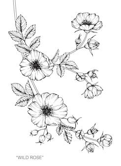 Ilustración de dibujo de flor rosa.