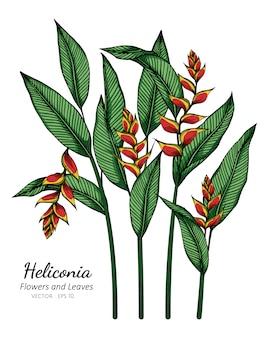 Ilustración de dibujo de flores y hojas de heliconia con arte lineal en blancos.