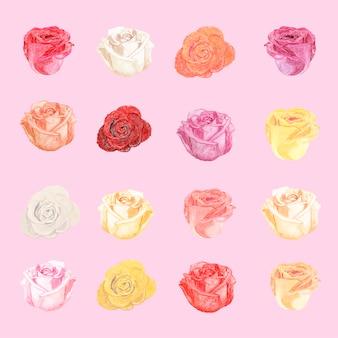 Ilustración de dibujo rosa blanca flor