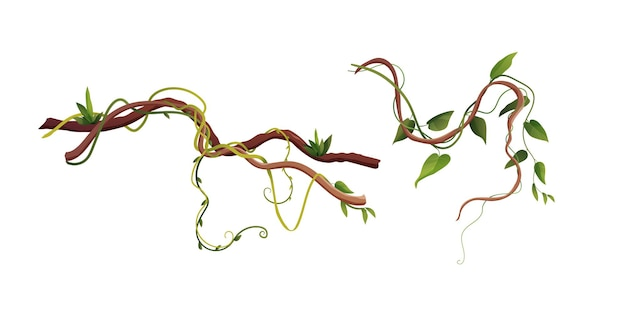 Ilustración de dibujos animados de ramas de liana o vid sinuosas